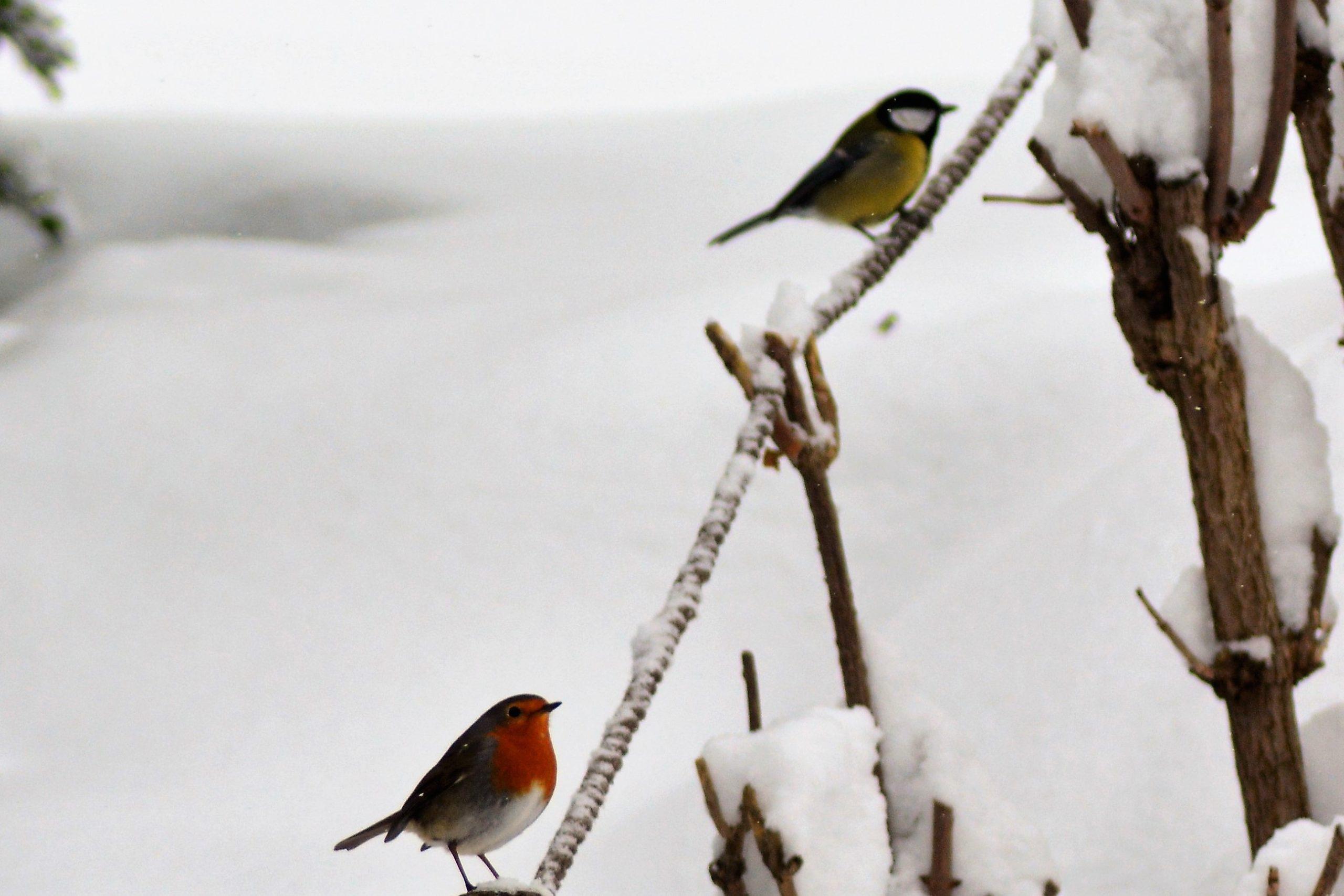 Conversation sous la neige